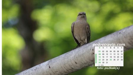 calendário dezembro 2013 pedreiravip